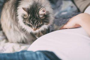 Puszysty kot